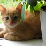 kattunge bild