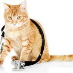 katt veterinar