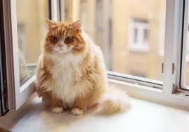 Din tjocka katt kan ge dig böter
