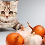 farlig mat för din katt