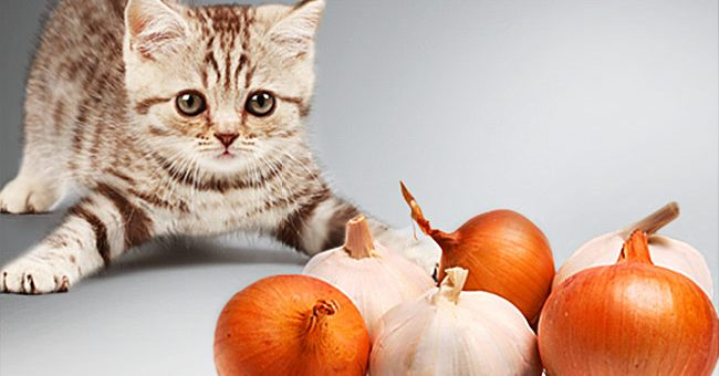 Ge inte din katt detta!