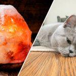 himalayasaltlamp och katter farligt