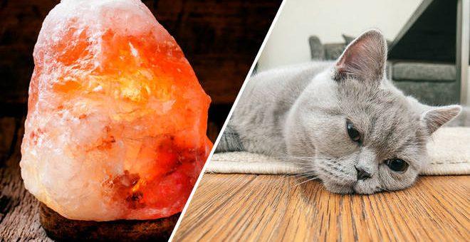 Himalaya saltlampa – farlig för djur