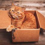 flytta med katten tips och råd