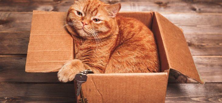 Ska du flytta med katten?