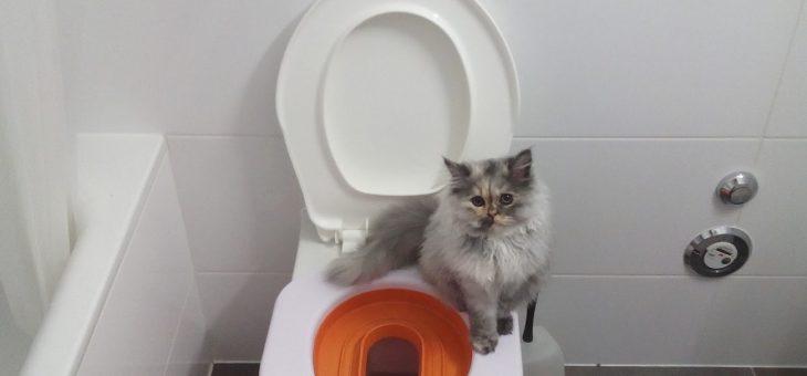 Tips med Kattprylar för den Kattokige!