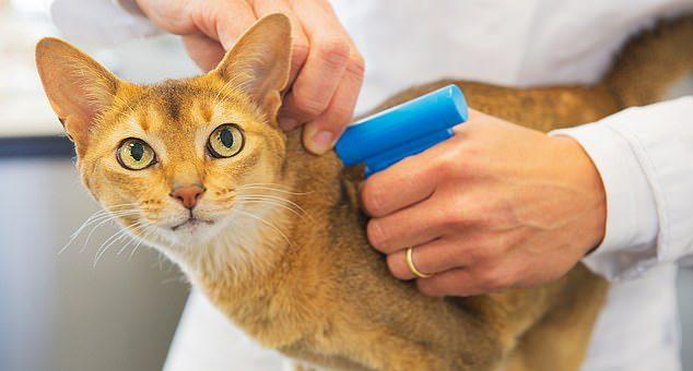 Mikrochip för katt