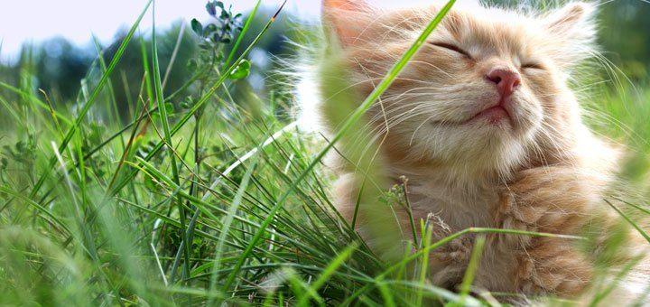 Ta hand om katten i sommar